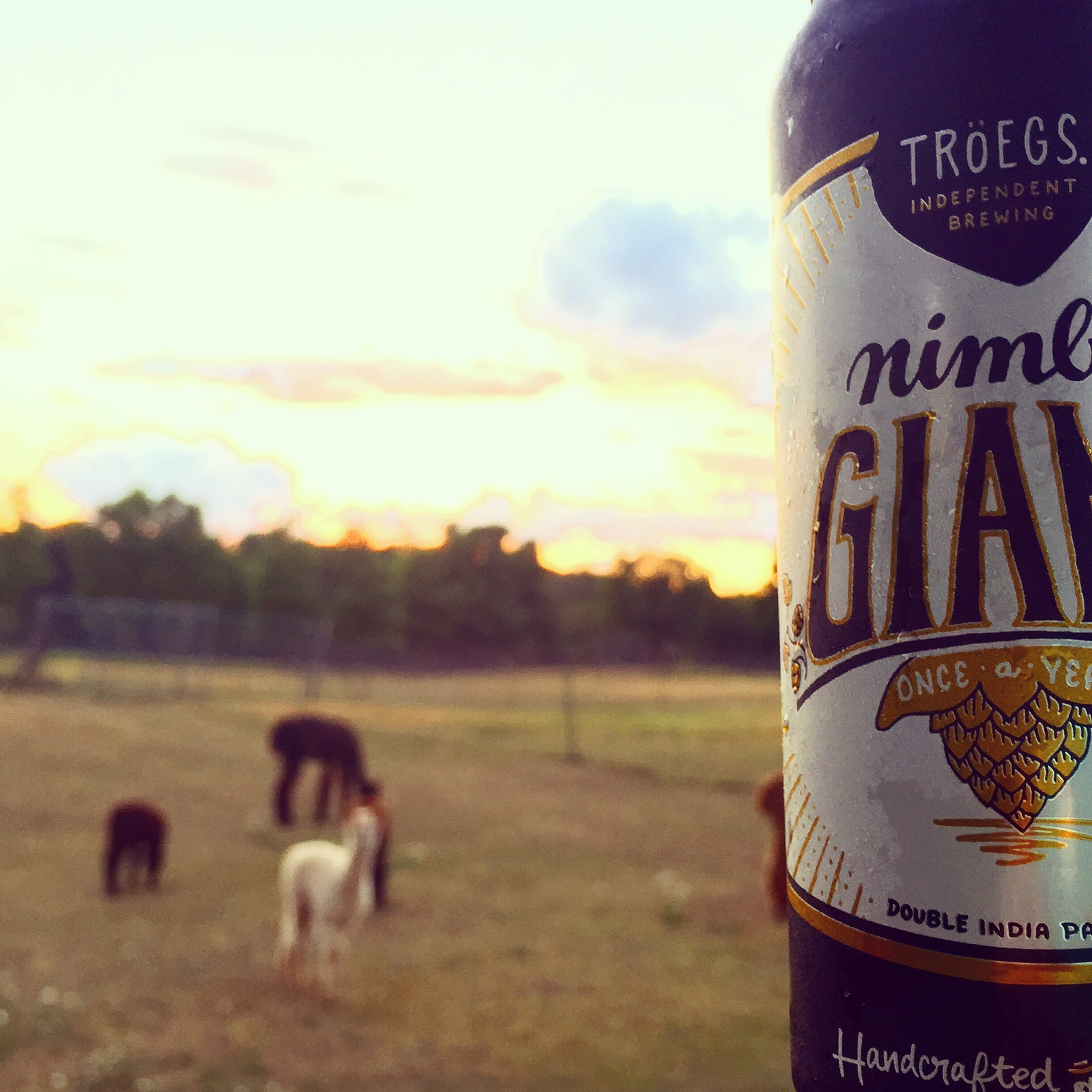 In Our Fridge: Tröegs Nimble Giant | Two Pints, Please!